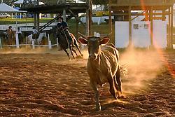 Prova de laço 12 Rodeio Internacional do Mercosul, um dos maiores eventos do gênero no parque de eventos Ireno Michel. FOTO: Jefferson Bernardes/Preview.com