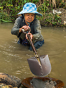 """22 APRIL 2014 - WANG NUA, LAMPANG, THAILAND: BAENG, 60 years old, gathers gravel to pan for gold in the Mae Wang. Villagers in the Wang Nua district of Lampang province found gold in the Mae Wang (Wang River) in 2011 after excavation crews dug out sand for a construction project. A subsequent Thai government survey of the river showed """"a fair amount of gold ore,"""" but not enough gold to justify commercial mining. Now every year when the river level drops farmers from the district come to the river to pan for gold. Some have been able to add to their family income by 2,000 to 3,000 Baht (about $65 to $100 US) every month. The gold miners work the river bed starting in mid-February and finish up  by mid-May depending on the weather. They stop panning when the river level rises from the rains. This year the Thai government is predicting a serious drought which may allow miners to work longer into the summer.    PHOTO BY JACK KURTZ"""