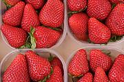 Pints of strawberries, Campo dei Fiori market, Rome, Italy.