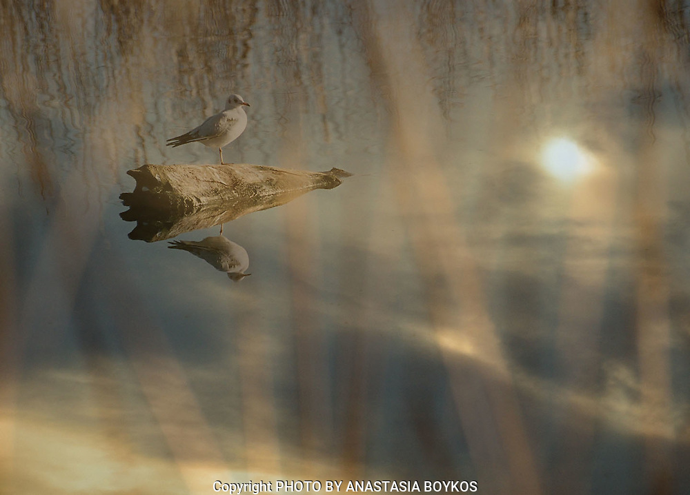 Υδάτινα Όνειρα VI<br /> <br /> Kastoria 2005