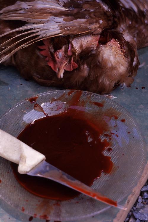 Carmo da Cachueira_MG, Brasil...Detalhe de um prato de sangue ao lado de uma galinha morta...Detail of a blood on the plate and a died chicken...Foto: LEO DRUMOND / NITRO