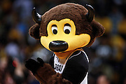 """SHOT 1/21/12 5:07:07 PM - Colorado's mascot """"Chip"""" performs during a break in the action against Arizona during the team's PAC 12 regular season men's basketball game at the Coors Events Center in Boulder, Co. Colorado won the game 64-63..(Photo by Marc Piscotty / © 2012)"""