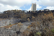 Israel, Haifa Carmel Mountain Raging forest fire near residential area. Haifa University in the background