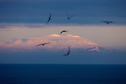 """Several seabirds fly over the Atlantic Ocean as the last light of day illuminates Snæfellsjökull, a glacier-covered stratovolcano in western Iceland. Located on the Snæfellsnes peninsula, Snæfellsjökull is 1,446 meters (4,744 feet) tall. Stratovolcanoes, also known as composite volcanoes, are typically cone-shaped and made up of many layers from many volcanic eruptions. Snæfellsjökull is approximately 700,000 years old and is estimated to have last erupted in 200 A.D. Snæfellsjökull is an Icelandic word meaning """"snowy mountain glacier."""""""