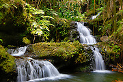 Onomea Falls, Hawaii Tropical Botanical Garden, Hilo, Hamakua Coast, Big Island of Hawaii
