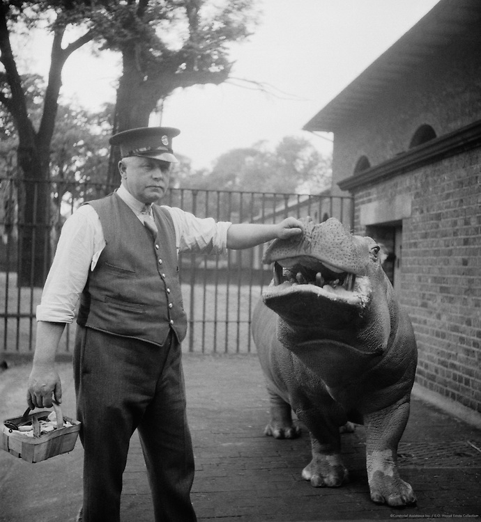 Zoo Keeper and  Hippo, London, 1934