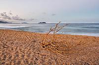 Galho seco sobre a areia na Praia da Armação ao anoitecer. Florianópolis, Santa Catarina, Brasil. / Dry tree branch on the sand at Armacao Beach at evening. Florianopolis, Santa Catarina, Brazil.