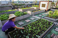 When the Bangkok floods of 2011 left Kasetsart University staff cut off from food, they decided to build an urban farm on the rooftop of the Faculty of Architecture building to sustain everyday needs. With assistance from the Thai Health Promotion Foundation the  urban farm produces herbs andvegetables.The brainchild of AssociateProfessor of Architecture Pasinee Sunakorn, who won the The National Research Council of Thailand's Invention Award for her work, the rooftop farm has inspired other similar projects around the city.