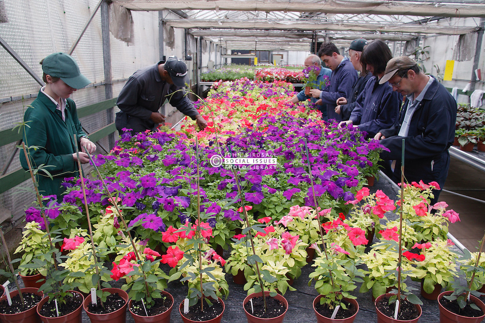 Workers with learning disabilities at work at Brook Farm; Linby; tending to flowers in greenhouse,