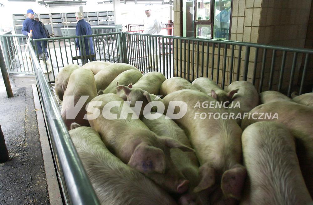 28.01.2003 Bialystok N/z transport swin do rzezni Bialostockich Zakladow Miesnych ( PMB ) fot Michal Kosc / AGENCJA WSCHOD