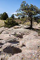 Spring season along the south rim of Castlewood Canyon State Park.  The park offers a varitey of ecosystems and ecotones.  Colorado.