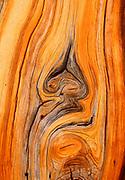Detail in Trunkof Lodgepole Pine,Yosemite National Park, California