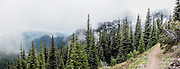 Trees, fog, Mount Townsend trail, Olympic National Forest, Olympic Peninsula, Washington, USA. Hike 8 miles round trip and 3000 feet in steady vertical gain to an alpine ridge on Mount Townsend Trail #839 in Buckhorn Wilderness, on the Olympic Peninsula of Washington, USA. Contact Quilcene Ranger Station, Olympic National Forest. This panorama was stitched from 3 overlapping photos.