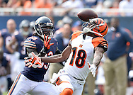 Cincinnati Bengals wide receiver A.J. Green cannot pull in a long pass as Chicago Bears cornerback Charles Tillman moves in to make an interception during the second quarter at Soldier Field in Chicago on September 8, 2013. Tillman returned the interception for 41 yards.  (UPI)