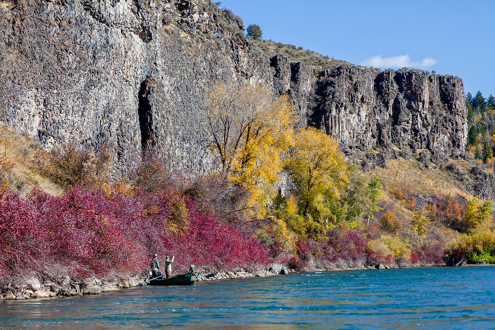 Drift boat fisherman and guide on the South Fork of the Snake River on an electric fall day in Eastern Idaho.  Licensing and Open Edition Prints.