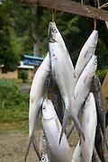 Fish for sale at roadside, Moorea, French Polynesia