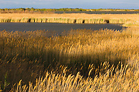 Lagoon with reed grass near Stes Maries de la Mer , Camargue, France