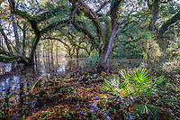 Everglades gallery johnbobcarlos Florida Art Swampman Artist