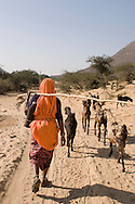 Woman in traditional clothes herding goats, Rajasthan, India