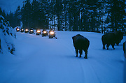 Snowmobiling in Yellowstone National Park.