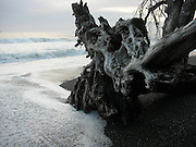 The tide comes in around driftwood on Rialto Beach in Olympic National Park. (Kristin Jackson / Seattle Times)