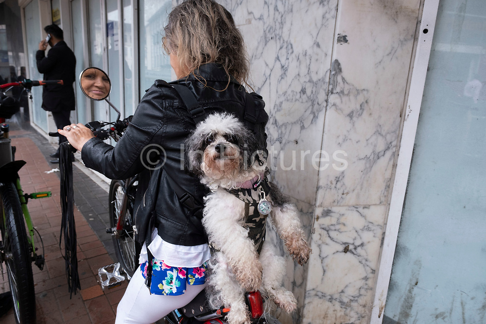 Wet dog is strapped to the back of a woman riding a bike around the city centre with a special harness on 18th August 2020 in Birmingham, United Kingdom. In this humourous scene, the woman is looking in the wing mirrors of her low rider cycle as her pet dog hangs quite confortably from her facing backwards in the opposite direction.