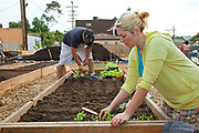 August 14, 2010. Denise and Frank plant their seeds and seedlings in their planting box. The Venice Garden broke ground in April, 2010. Soil tests revealed high levels of arsenic and lead because of previous uses which included a railroad line going through the lot. Steps were taken which included adding protective layers and adding new soil. Planting began in August and the first harvest was in October, 2010. Venice, California, USA