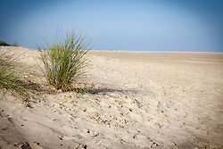 Grass growing in desert, Renesse, Schouwen-Duiveland, Zeeland, Netherlands