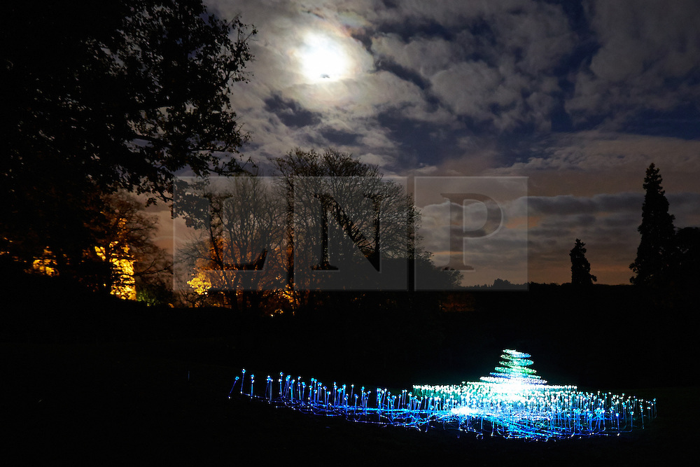 © Licensed to London News Pictures.  13/11/2013. AYLESBURY, UK. A light installation by artist Bruce Munro (not pictured). The piece called River of Light is created by arranging 6,500 glass spheres which slowly change colour. It is one of six and part of the Winter Light event at Waddesdon Manor which runs from today until 1st January 2014. Photo credit: Cliff Hide/LNP