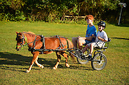 Old Bethpage, New York, USA. September 28, 2014. Chef the miniature horse is pulling a small cart with two redhead boys, the younger one wearing a helmet, as dusk approaches at the 172nd Long Island Fair, a six-day fall county fair held late September and early October. A yearly event since 1842, the old-time festival is now held at a reconstructed fairground at Old Bethpage Village Restoration. Chef is a 9-year-old horse, and the younger boy is holding the reins and driving.