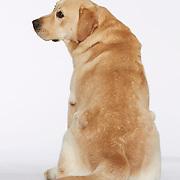 20141106 Doreen Dogs
