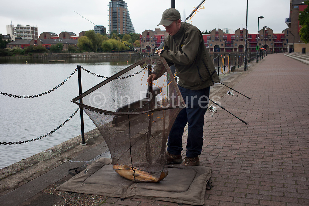 Fisherman lands a large carp in Shadwell Basin in East London, UK.