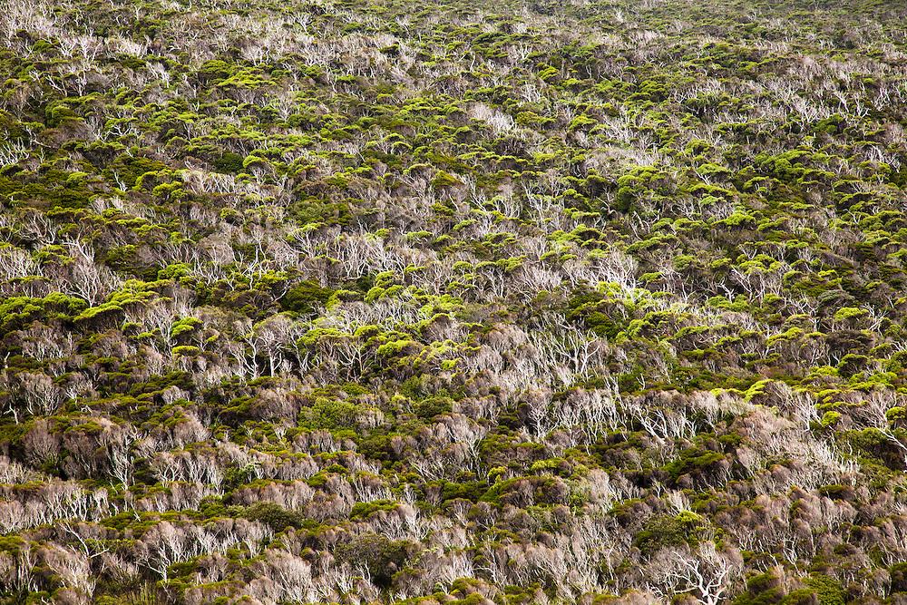 Windblown coastal heath, Southwest National Park.