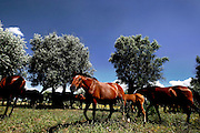 Mares and their colts stay on free land.