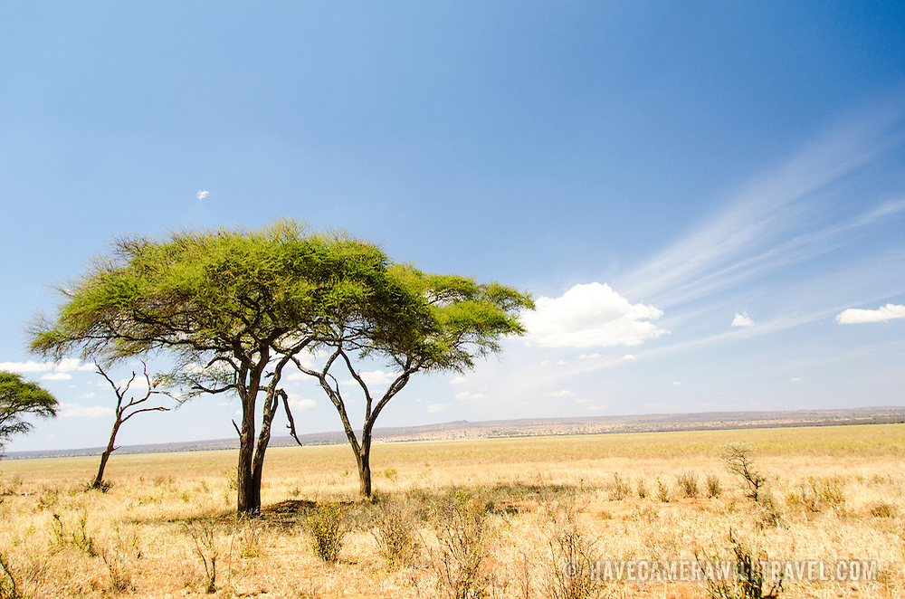 The wide open spaces of the swamp plains at Tarangire National Park in northern Tanzania not far from Ngorongoro Crater and the Serengeti.