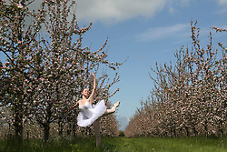 © London News Pictures. 11/05/2013. West Lydford, UK. Ballet Dancer Ceara Hoggett (16), of Glastonbury, dancing amongst cider apple trees which are in blossom at Bob Wadey's Orchard in West Lydford, Somerset. Photo credit: Jason Bryant/LNP