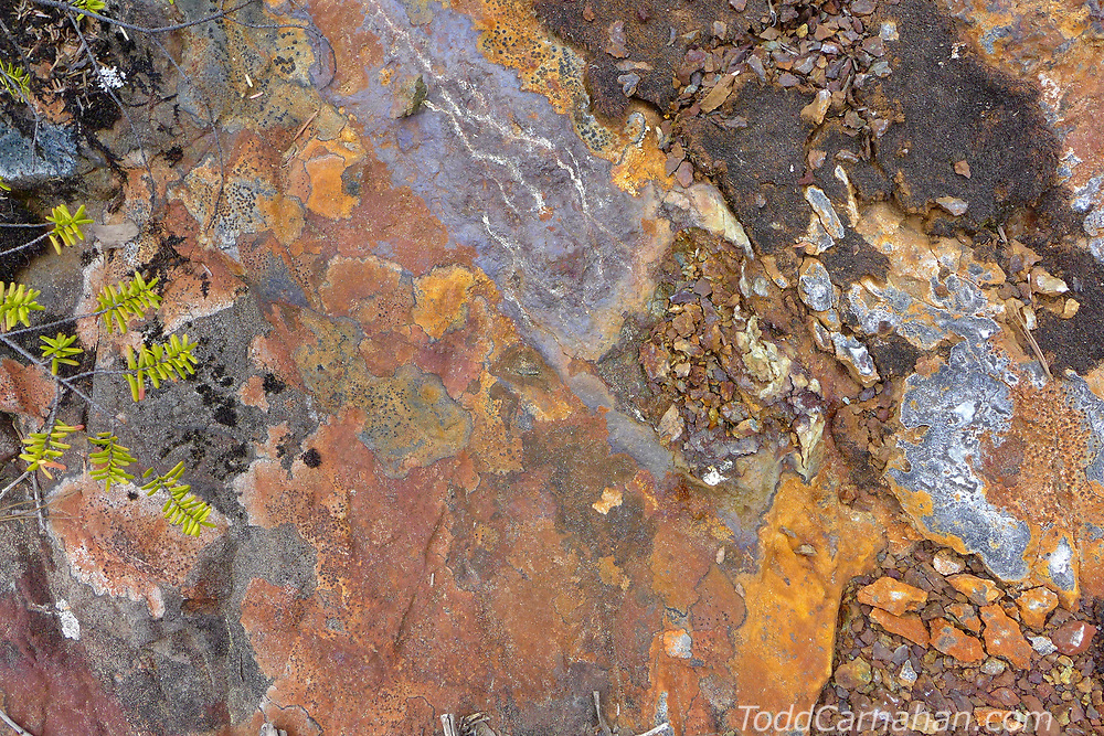 ferrous iron rock lichen