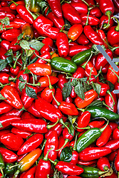 Fresh peppers in market, San Ramon, Alajuela, Costa Rica, Costa Rica.Costa Rica.