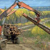 Logging in Siberia.   Accession #: 0.94.185.003.03