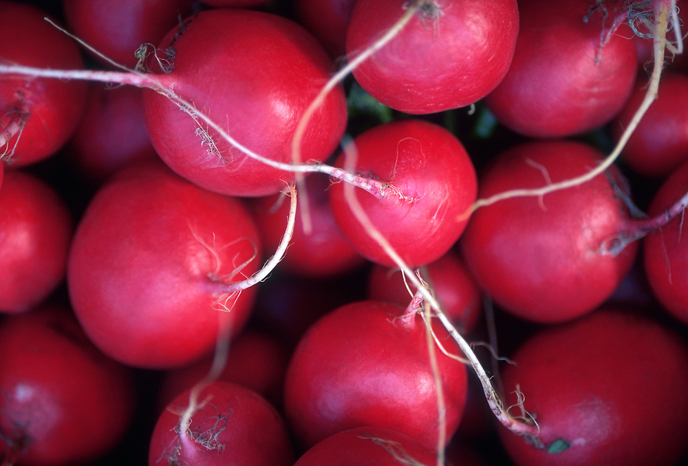 Close up photograph of a group of round red radishes