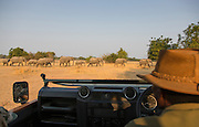 Safari Guide watching African Elephants, Luangwa River Valley National Park, Zambia, Africa