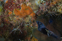 Rock Shrimps and Moray