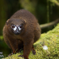 Parc National de Ranomafana MADAGASCAR