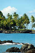 Palm trees grow on a rocky shoreline at the edge of the Pacific Ocean near Punta Rio Claro National Wildlife Refuge, Costa Rica.