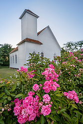 Wild rose (Rosa sp.) in front of historic Frankford Church on native Blackland Prairie at the Frankfurt Prairie Preserve, Dallas Texas, USA. (Tentative ID).