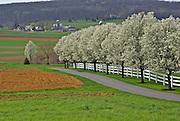 PA, family farms, springtime blossoms