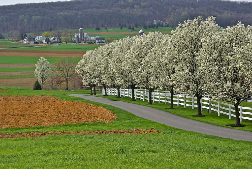 PA, family farms, springtime blossoms