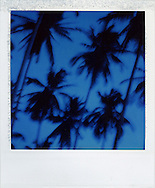 Blurred coconut tree silhouettes set against a deep blue sky, Palawan Island, Philippines, Southeast Asia