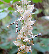 Insects, bugs, and arachnids among other invertebrates in southern BC and Vancouver Island in the Pacific North-West.