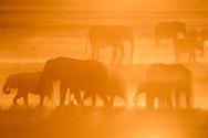 Impressionen von der Chobe Riverfront im Norden des Chobe Nationalparks am Ländereck von Namibia, Sambia und Zimbabwe mit Mutterherden von Elefanten